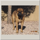Kenoa and Clints from Larry Coldwater Payton 14mths1008.jpg