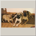 Moonie, Jasmine and Oscar 308 same owners Sue & Guy.jpg